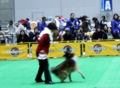 2008.12.19ジャパンドッグフェスティバル3