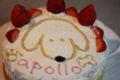 2009.2.15アポロのケーキ