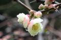 2009.2.20新宿御苑3