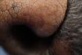 2009.2.22マクロで鼻