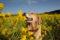 2009.2.28菜の花とアポロ2