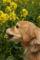 2009.2.28菜の花とアポロ