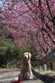 2009.3.29桃の花2