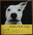 2009.4.1SHELTER dogs1