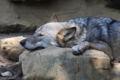2009.10.30多摩動物公園2