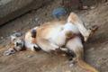 2009.10.30多摩動物公園4