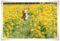 2010.3.14菜の花2