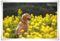 2010.3.14菜の花1