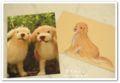 2010.3.17ポストカード