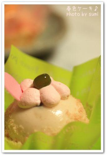 2010.3.24桜のムース
