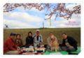 2010.4.17思川桜3