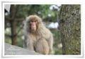 2010.4.30猿