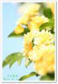 2010.5.2木香薔薇
