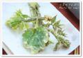 2010.5.2山菜の天ぷら2
