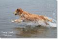 2010.5.4水泳1