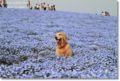 2010.5.4ひたち海浜公園2