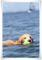 2010.5.8水泳1