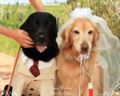 2010.5.28結婚式1