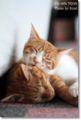2010.7.1猫カフェミーシス7