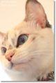 2010.7.1猫カフェミーシス5