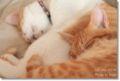 2010.7.1猫カフェミーシス4