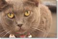2010.7.1猫カフェミーシス3