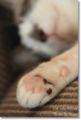 2010.7.1猫カフェミーシス1