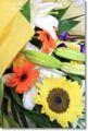 2010.7.15お花