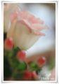 2010.7.28四十九日の花