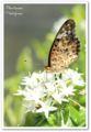 2010.8.5花の美術館2