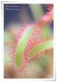 2010.8.20花の美術館3