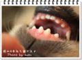 2010.9.7歯が生え変わるお年頃1