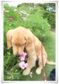 2010.9.29花の美術館3