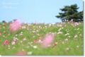 2010.10.07昭和記念公園3