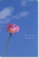 2010.10.07昭和記念公園2