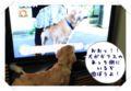 2010.10.15テレビの中の犬