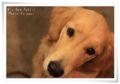 2010.11.02K's Dog Public3