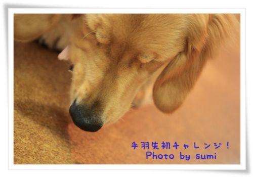 2010.11.25手羽先初体験3