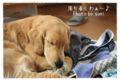 2010.12.19洗濯物犬2