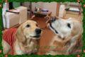 2010.12.26キャップ&チェルシー5