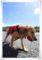 2011.9.25宮の浜3