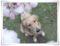 2012.4.27八重桜の公園4