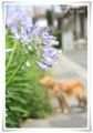 2012.7.8お散歩5