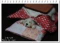 2012.11.10コタツ犬2