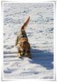 2013.1.15雪の翌日4