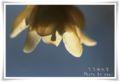 2013.2.23蝋梅の里4