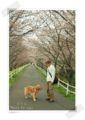 2013.3.24桜のトンネル2