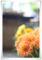 2013.4.1ファンの花1