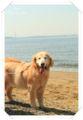 2013.4.29I海浜公園1