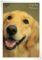 2013.6.11K's Dog Public6